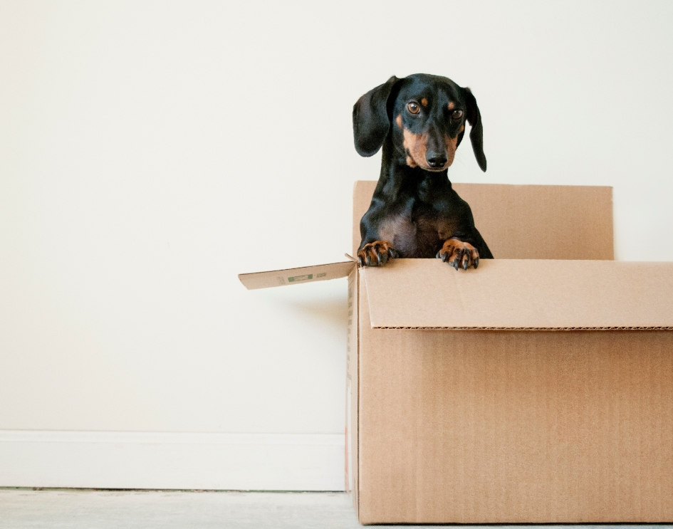 Relocation and moves with LSS